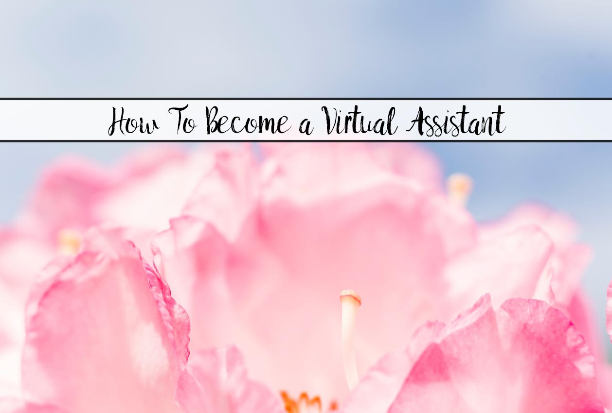 Featured image for virtual assistants. Flower with text overlay.